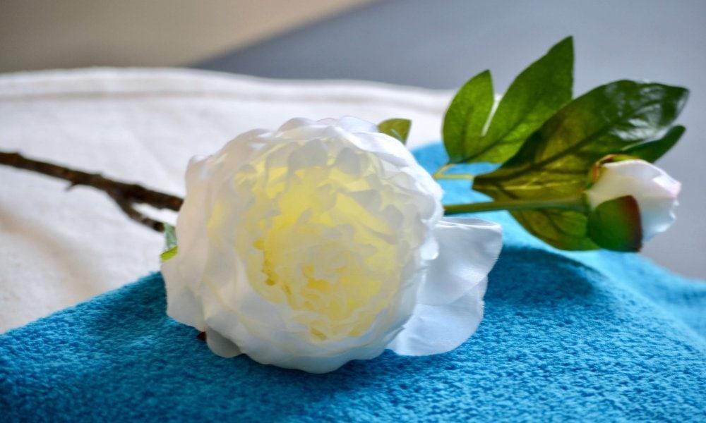 Eine Rose als Impressione der Fachpraxis für Osteopathie Birte Steigerwald