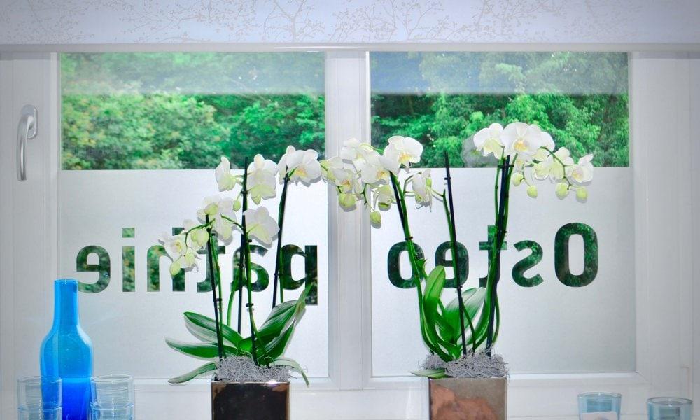 Das Fenster der Fachpraxis für Osteopathie Birte Steigerwald